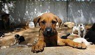 Sözün Bittiği Yer: Ankara'da Yavru Köpeğe Tecavüz İddiası ve Bir Yardım Çağrısı