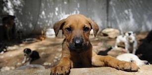 Görevliler 'Bayram Tatiline' Çıktı: Belediye Barınaklarındaki Hayvanlar 'Aç ve Susuz' Bırakıldı İddiası