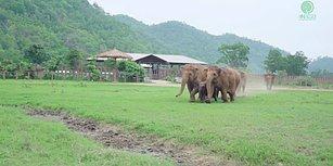 Kimsesiz Kalan Bebek File Merhaba Demeye Giden Fillerin İnsanın İçini Isıtan Görüntüleri