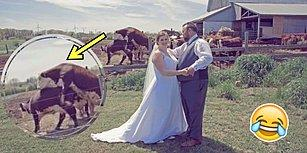 Evlilik Fotoğraflarını Çiftlikte Çektirmek İsteyen Çiftin Trollendiği Aşk Dolu Kare!
