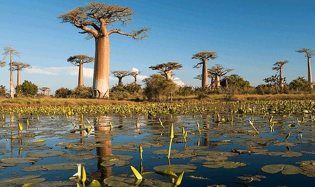5. Madagaskar hangi kıtada bulunmakta peki?