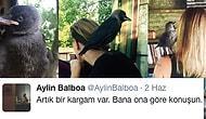 Sahiplendiği Kargayla Sıkı Bir Dostluk Kuran Aylin Balboa'nın İçinizi Isıtacak Hikâyesi