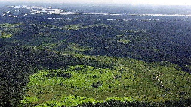 Ağustos 2015 ile Temmuz 2016 arasında 8 bin hektarlık yağmur ormanı yok oldu. Brezilya Ulusal Uzay Araştırmaları Enstitüsü'ne (INPE) göre bu, 2008 yılından bu yana görülen en büyük orman kaybı durumunda maalesef. Bir önceki yıldan ise %29 daha fazla.