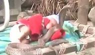Hindistan'da Kobraların Arasında Mışıl Mışıl Uyuyan Bebek