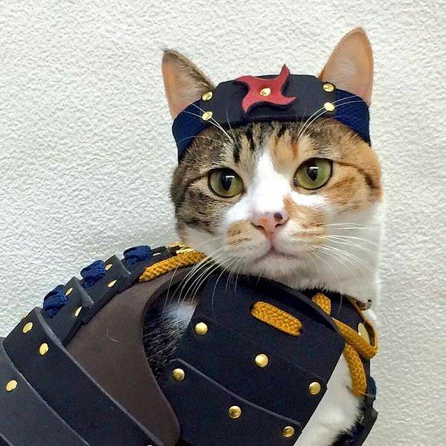 Samurai Age küçük ırk köpekler ve kediler için özel tasarım zırhlar yapıyor.