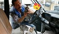 Gerçek Bir Hayvansever: Otomobilini Kediler İçin Yuvaya Dönüştüren Tahir Çeven ile Tanışın!