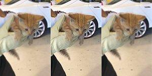 Elon Musk Övünerek Paylaştı: Tesla Servisi Kedi Kurtarma İşi İçin de Hizmetinizde!