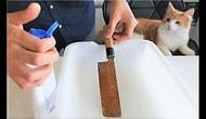 Paslanmış Geleneksel Japon Bıçağını Küllerinden Doğuran Adam