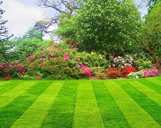 Yeni biçilmiş çim