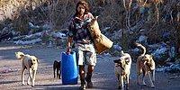Sokak Köpeklerine Bakan Gencin İçinizi Isıtacak Sımsıcak Hikayesi!