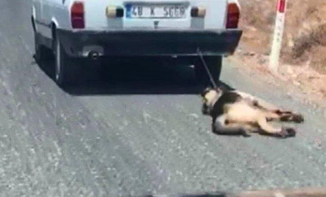 Köpek tedavi altına alındı