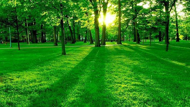 Doğa!