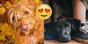 'Yılın Köpek Fotoğrafçısı Yarışması' Kazananlarını Açıkladı: Hepsi Birbirinden Patili 30 Kare
