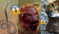 Doğanın Kuytu Köşelerinde Nefesinizi Kesmek Adına Gerçekleşmiş 21 İlginç Görüntü