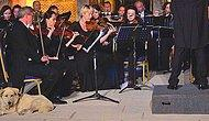 Viyana Oda Orkestrası, Efes'te Konser Verirken Sahneye Çıkan Köpek