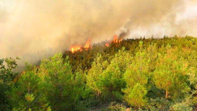 Çanakkale'nin Ezine İlçesi'nde  tarım arazisinde başlayıp ormana sıçrayan yangında ilk belirlemelere göre 30 hektar orman kül oldu.