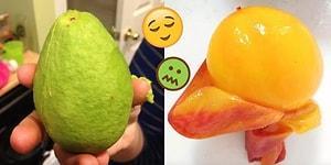 Kabuğu Soyulmuş Bu 16 Meyveyi Görür Görmez, Ya Haz Duyacak Ya da Bir Tuhaf Olacaksınız!