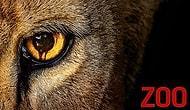 Hayvanlar Ayaklanırsa Ne Olur? Farklı Senaryosuyla Dikkatleri Üzerine Çeken Yabancı Dizi: Zoo