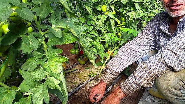 11. Organik Bitki Yetiştiriciliği