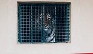 Türk Fotoğrafçıdan Hayvanların Yalnızlığını Çarpıcı Şekilde Yüzümüze Vuran Proje: Zoosarenotgreen