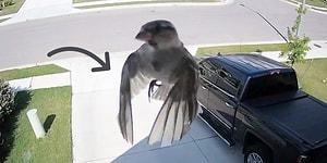 Kameranın Çekim Hızı, Kuşun Kanat Hızıyla Aynı Olursa Ne Olur?