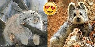 İnsanın Kediye, Köpeğe Alternatif Olarak Eve Alıp Besleyesi Geldiği 16 Ponçik Hayvan