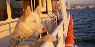 🐾 Patilere Özgürlük! İstanbul Şehir Hatları 'Evcil Hayvanlara Kafes' Zorunluluğunu Kaldırdı