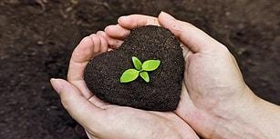 Nedir Ne Değildir? Genetiğiyle Oynanmış Tohumlar Hakkında Bilinmesi Gereken Her Şey
