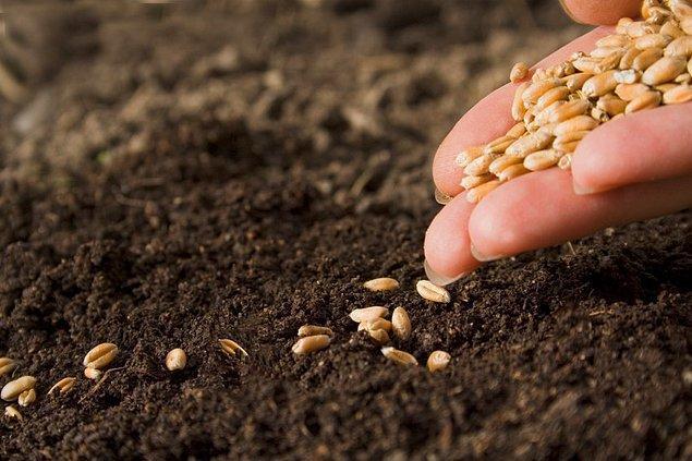 3. Yapay tohumların aksine doğaya uyum sağlarlar.