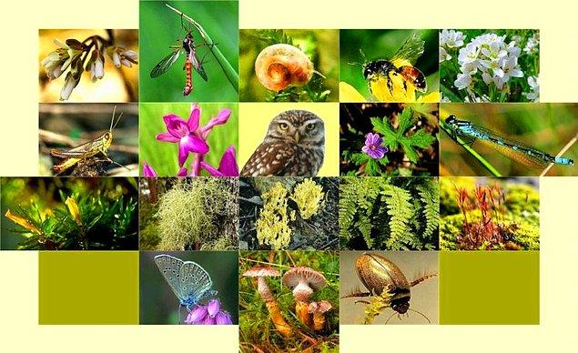 8. Biyolojik çeşitliliği korur.