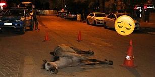 İnsanlık Ayıbı: Faytoncu, Sıcak ve Susuzluktan Ölen Atı Bırakıp Kaçtı