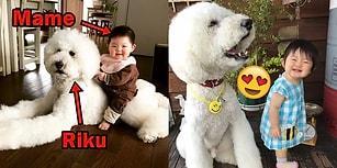 Minik Bebekler ve Devasa Köpüşler: Mame ve Kanişlerinin Kalbinizi Isıtacak Dostluğu