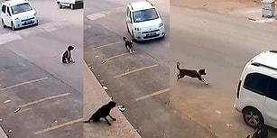 Bu Zalimlik Ne Zaman Bitecek? Antalya'da Bir Kişi Bilerek Üzerine Sürdüğü Araçla Köpeği Öldürdü...