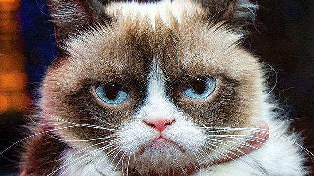 11. Bu kedinin cinsini hatırlıyor musun?