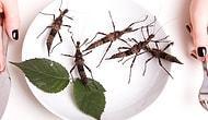 İsveçli Bilim İnsanları Araştırdı: Yılda 1 Kilo Böcek Yiyoruz!