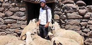 Çobanlık Yaparak Okuyan ÖSYM Mağduru Genç: İmkânsızlıklarla Sınava Girdim, Yetkililerden Yardım İstiyorum'