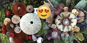 Doğanın Akıl Almaz Güzelliğini Keşfeden Jill Bliss Büyüleyici Mantarları Fotoğraflıyor!