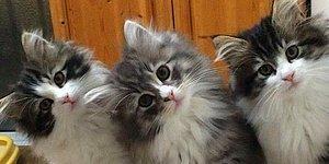 Söylenenlere Aldırmayın: Aslında Hepimiz Sağlığımız İçin Kedili Kadın Olmalıymışız!