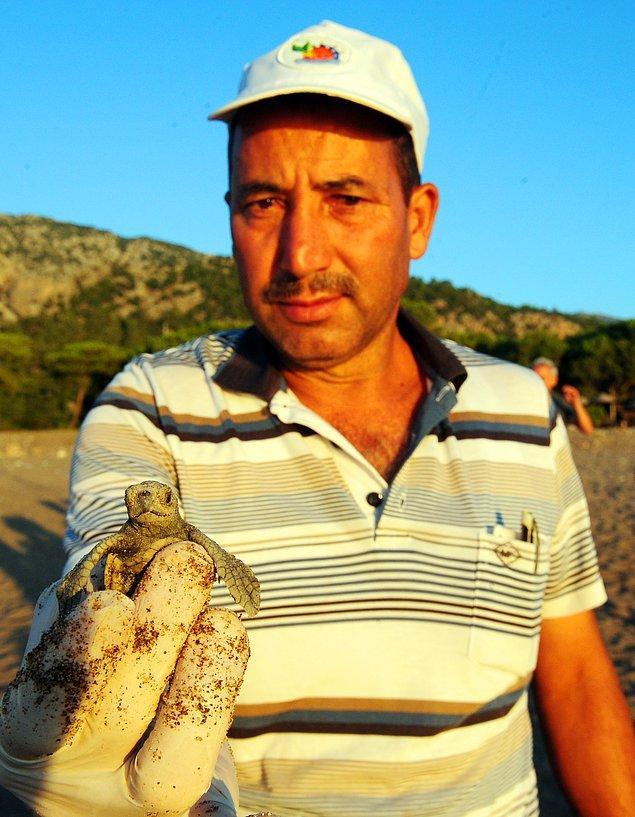 53 yaşındaki Mustafa Ilgaz yaklaşık 20 yıldır nesli tükenme tehlikesiyle karşı karşıya olan bu canlıları denize ulaştırıyor.