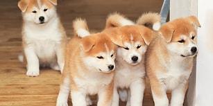 Son Sorusunu Köpek Delilerinin  Görebileceği Test!