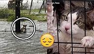 Harvey Kasırgası Sonrası Yardıma Muhtaç Hayvanlar ve Onları Bırakmayı Reddeden Harika İnsanlar