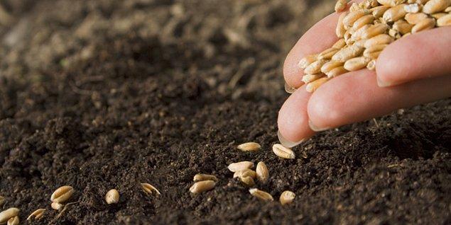 """3. """"Tohumluk"""" ürünler ortadan kalkacak ve kendi kendine üreyen tohumlar olmayacak."""