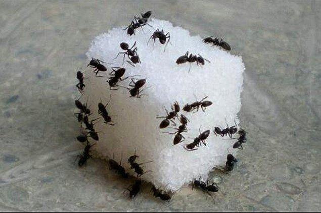 3. Küp şekerin üstüne üşüşen karınca
