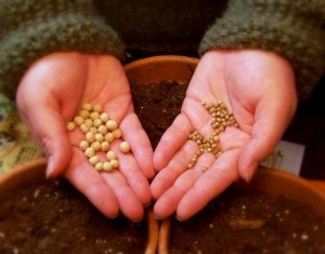 8. Tohum toplamak, büyütmek ve tüketmek hayatın muhteşem döngüsünü gösterir.