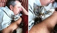O lanet kedileri istemiyorum !!! En güzel kedi ölü kedidir! Asla eve kedi giremez! demeyin KEDI KAZANIR