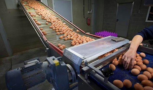 TESK: 'Halkımız güvenle yumurtalarını yiyebilirler'
