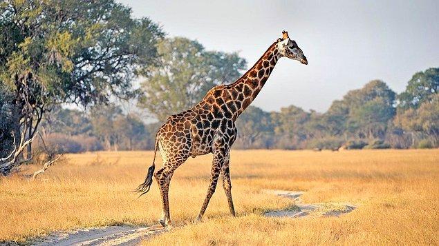 5. Böcek görünce parende atarak uzaklaşanlar için hiç de sağlıklı olmayacak bir tercih olarak Güney Afrika.