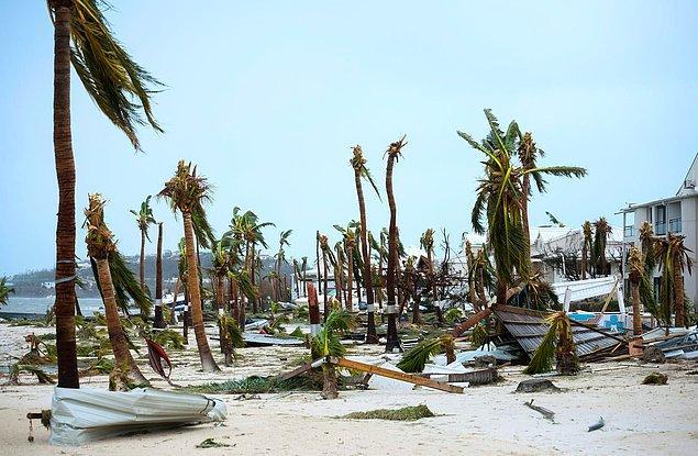 6. Saint Martin kıyısında parçalanmış, uçları kopmuş palmiye ağaçları.
