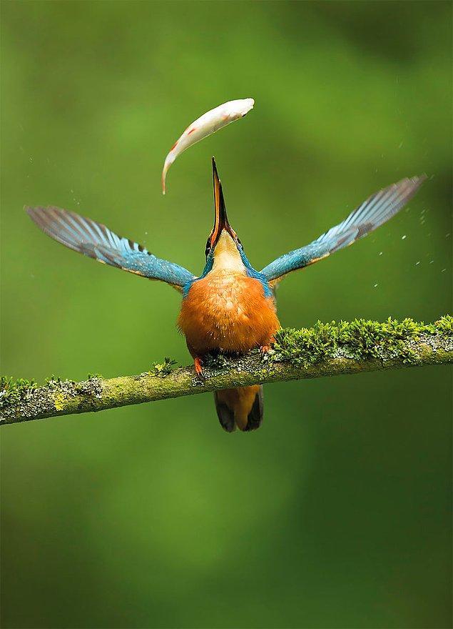 7. Catch Of The Day (Günün Karı) - Vince Burton, İngiltere Doğa Fotoğrafçıları Ltd. People's Choice Kazananı