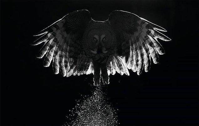 12. Twilight (Alacakaranlık) - Markus Varesvuo, Kuusamo, Finlandiya, Yaratıcı İmgeler Kategorisinde En İyi Portföy Kazananı